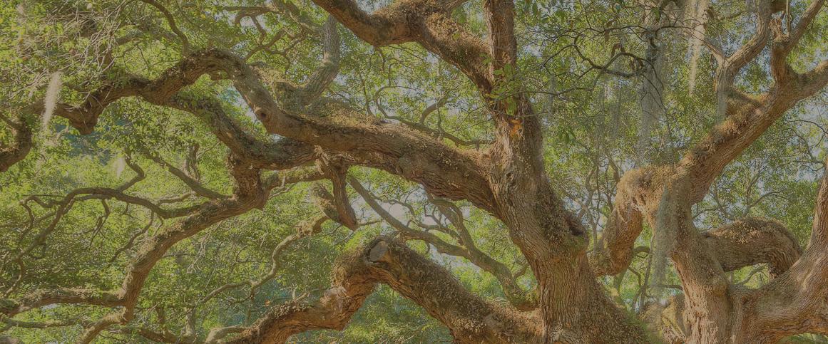 slide-bg-tree-v4